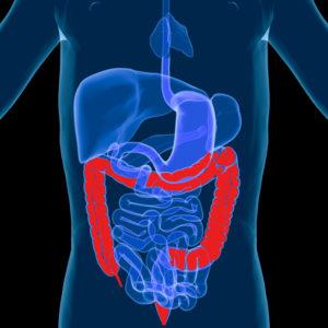 large_intestine