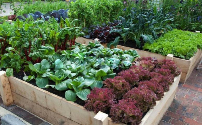5 key vegetable gardening tips for beginners my gut instinct - Gardening tips for beginners ...